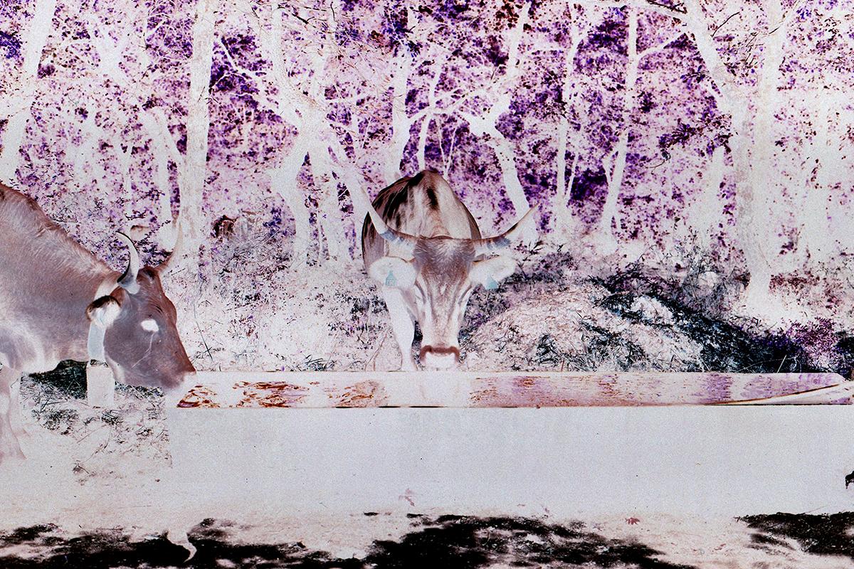 Parallel Eyes — Alessia Rollo — Futuro Arcaico Archivio